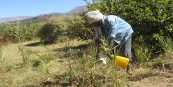 Proyecto Torrente para conservación de suelo y agua - Etiopia Utopia