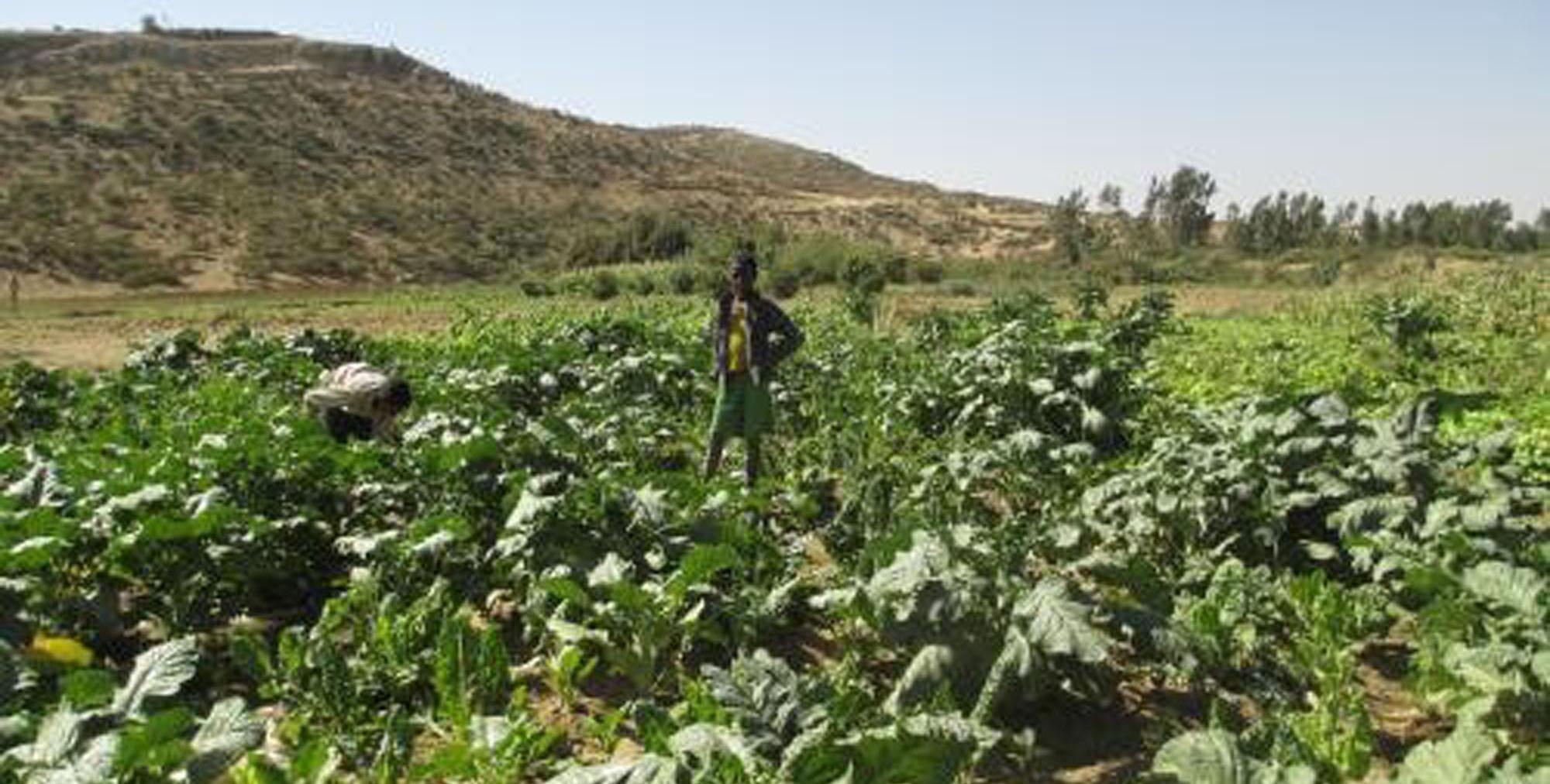 Gota a gota. Construcción de canales de riego - Etiopia Utopia